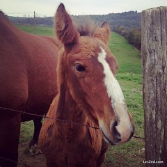 Poulain du Pilat // Foal from the Pilat #poulain #foal #cheval #horse #parcdupilat #animal #animals #animallovers #pets #petstagram #petsagram We are a #digitalnomad #family, currently in #pilat, near #condrieu (#france) This #photo was taken with my #iph