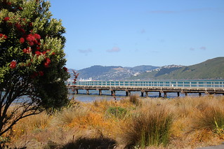 Summer at Petone Foreshore