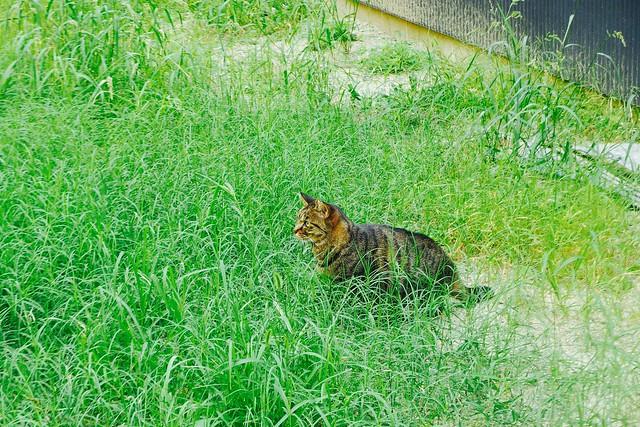 Today's Cat@2016-10-14