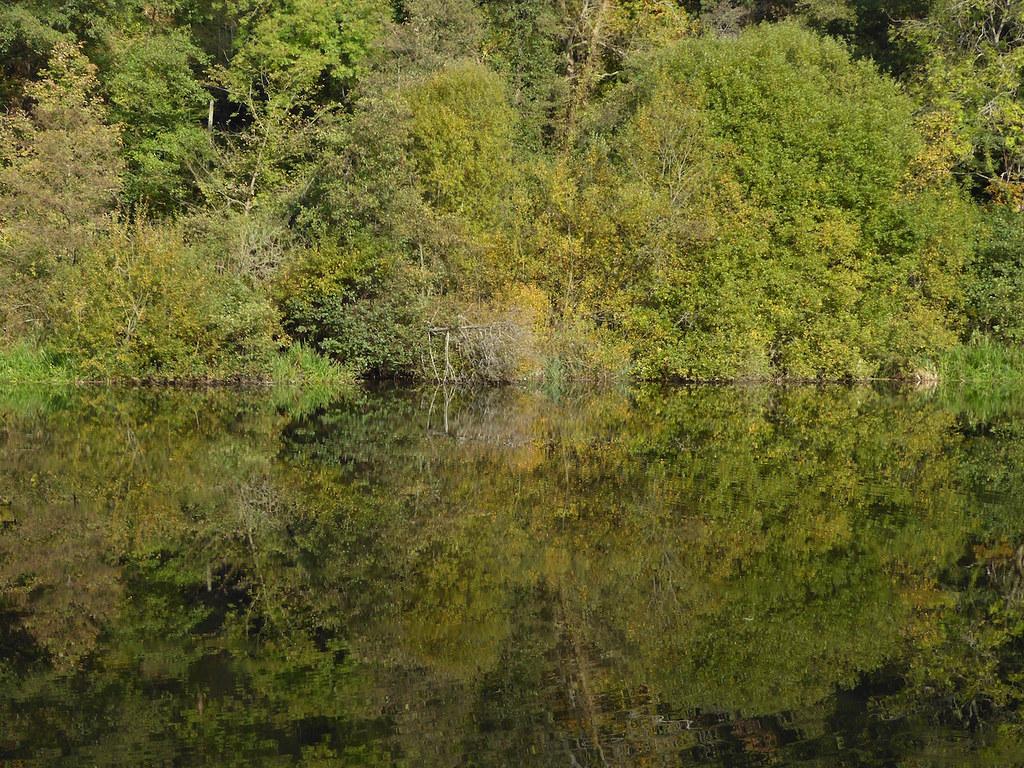 Reflection near Albury Guildford to Horsley walk