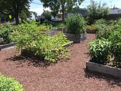 Poolesville Comm Garden