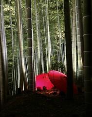 Kyoto forest lights