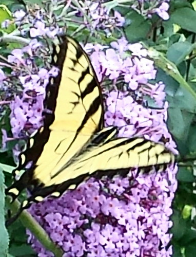 Butterfly at the Arboretum