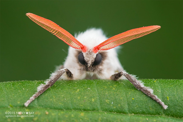 Moth - DSC_8477