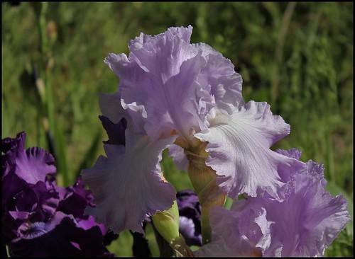 Orchidarium (2)