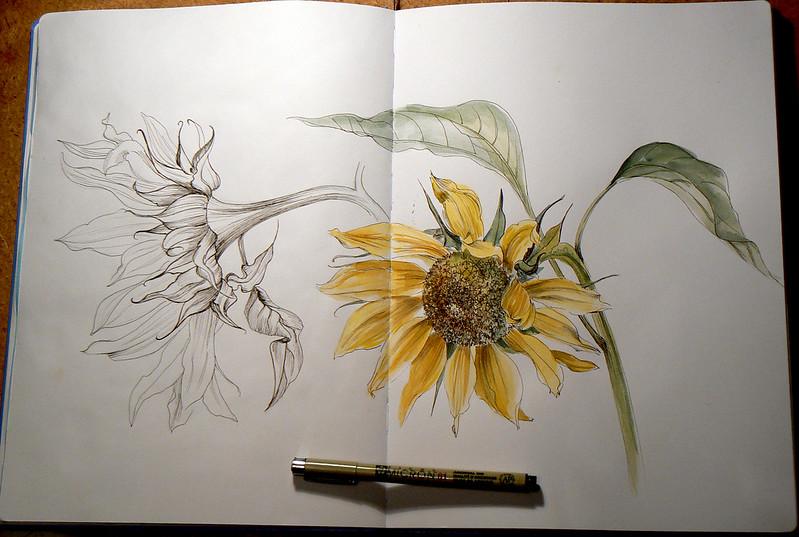 Подсолнухи. Скетч, линер и акварель. Sunflowers. Sketch, liner, watercolor