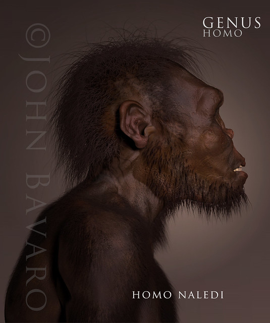 Homo naledi side