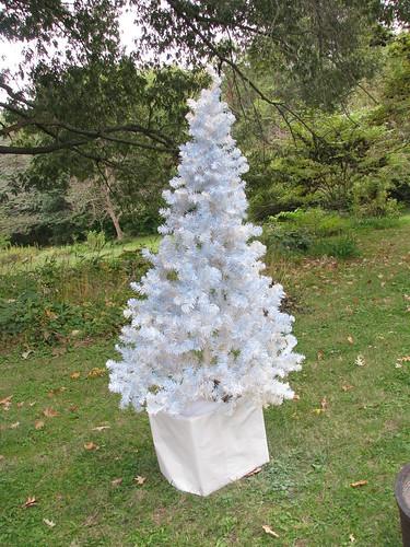 spray painting the tree