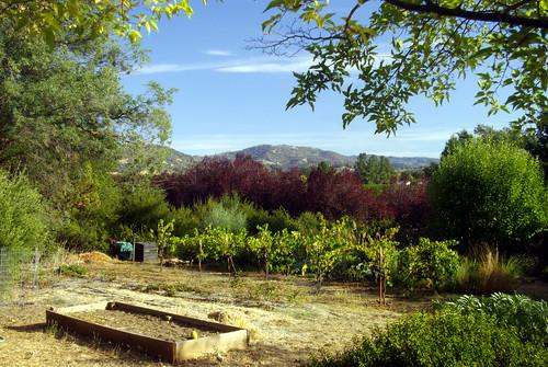 california usa october valley redwood 2015