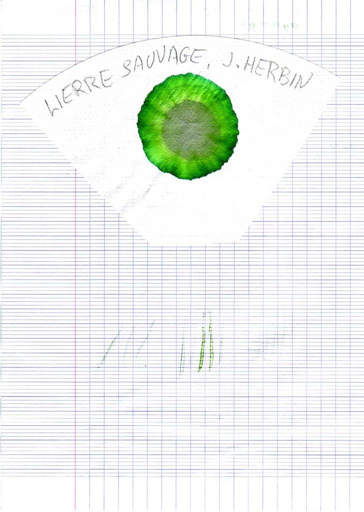 LierreSauvage-2-Herbin