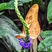 Butterfly with a Flower....Beautiful!