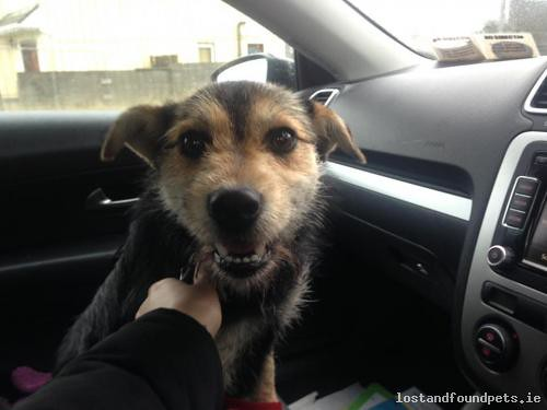 [Reunited] Tue, Dec 1st, 2015 Found Female Dog - The Local Area, Charlestown, Mayo