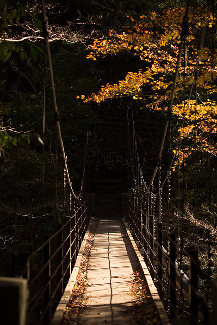氷川渓谷 #tokyo島旅山旅