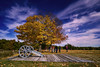 British Light 6 Pounder by Stunning Yellow Fall Tree Freeman Farm + Balcarres Redoubt (Sept-1777) - Saratoga NHP NY 10-15-2016.