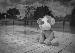 A Lonely Puppy