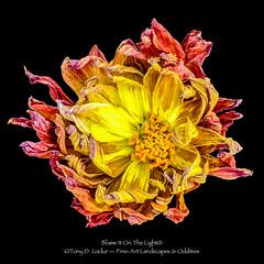 Frizzle'd Flower