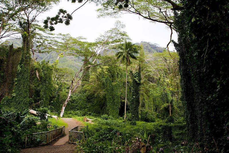 Hawaii_132