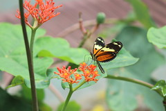 Parque_mariposas