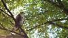 Juvenile RT Hawk 1 by mausgabe