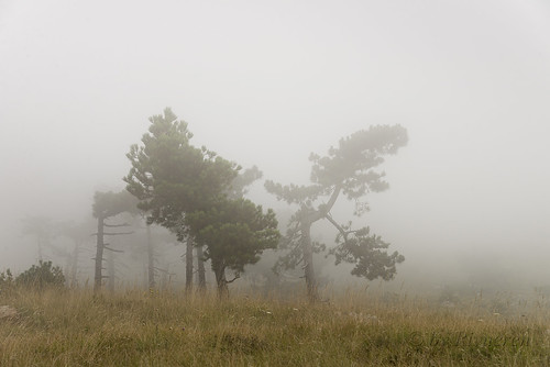 August in the mist