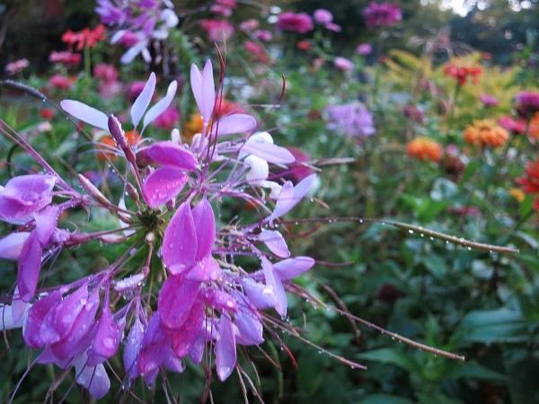 october flower3