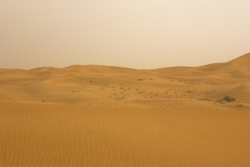 camel desert dubai sandstorm dunes arabic desert