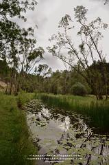 Cañón del Río Lobos (Soria, España)