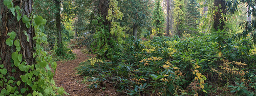 autumn forest finland elimäki mustila arporetum