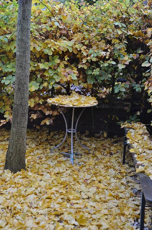 november frontyard