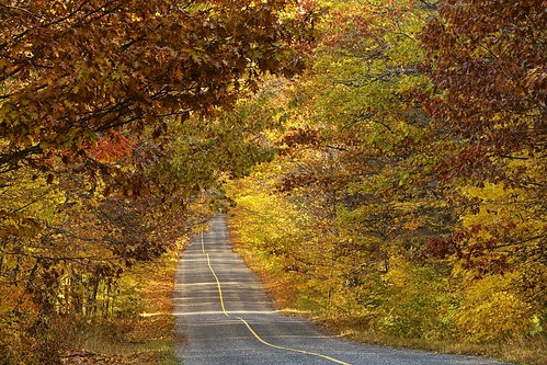 autumn sunlight ontario nature leaves tarmac yellow rural forest landscape maple scenery fallcolors roadtrip foliage canopy oaktree northernontario fallcolours stjosephisland pline procontrast nikcolourefex highway548 detailextractor jocelyntownship xf55200mm fujixt1 fall2015