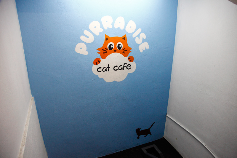 Purradise Cat Cafe TTDI KL