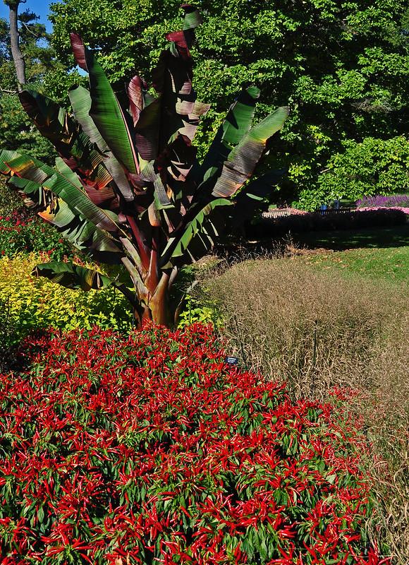Flower Garden Walk (18)