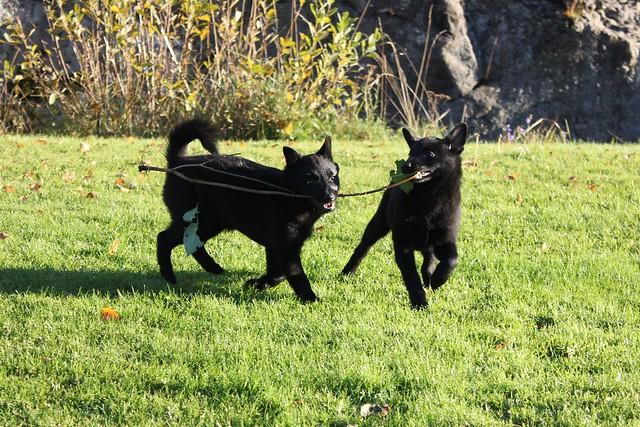 Ninja och tosca pinne