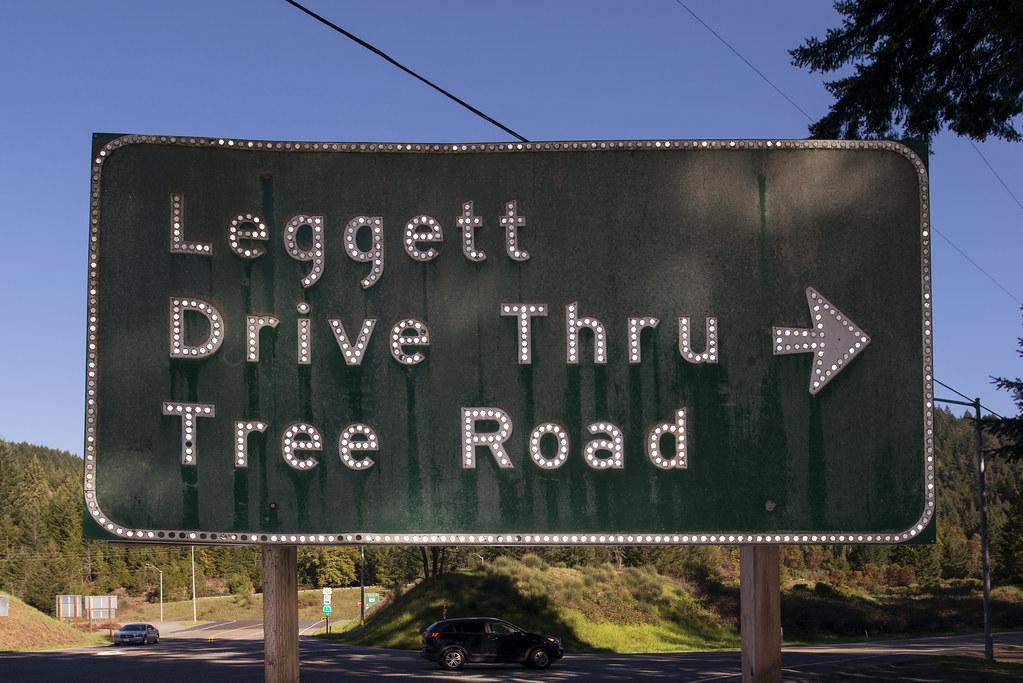 Drive Thru Tree Road