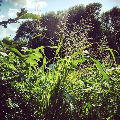 summer shower outdoor sunday easylivin uploaded:by=flickstagram instagram:venuename=whirlawayfarm26garden instagram:venue=244576087 instagram:photo=1032851349239388400144513221