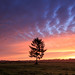 The tree in colors by koos.dewit