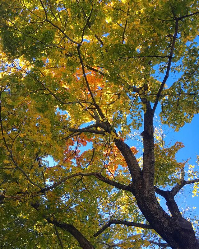 Outside in October