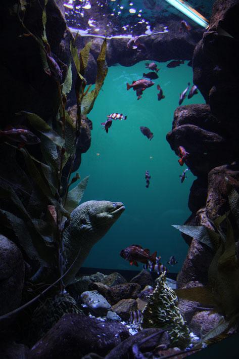 070915_aquarium15