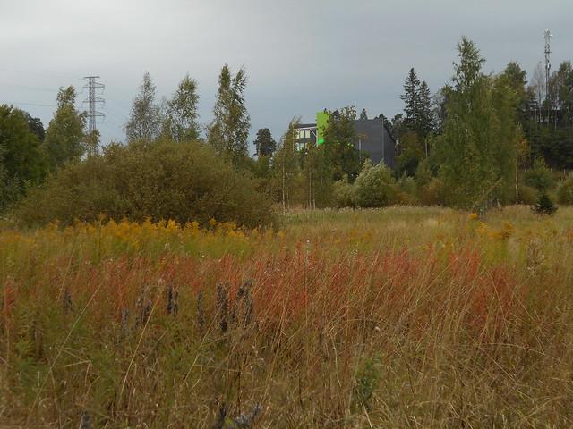 Niittynäkymiä syksyllä; maitohorsmaruskaa ja tarhapiiskuja 15.9.2015 Espoo Leppäsilta