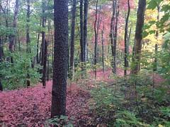 Fall Underbrush