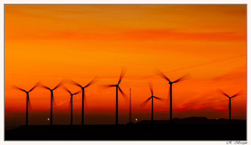 Windmills in the morning light