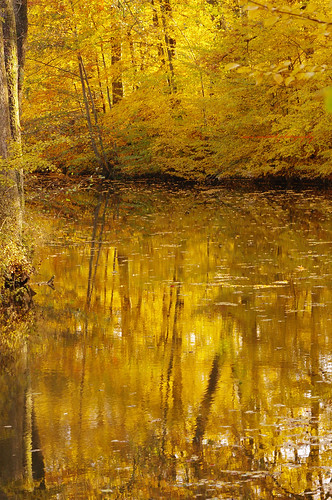 autumn reflects waterscape pntaxkx
