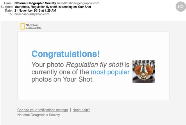 Your photo Regulation fly shot is trending on Your Shot