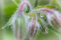 spiky waterdrop