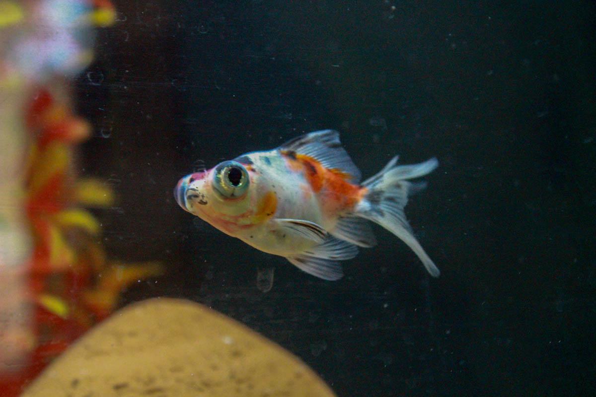 Aquarium de Sam Soul 23800729246_3518ec5f12_o