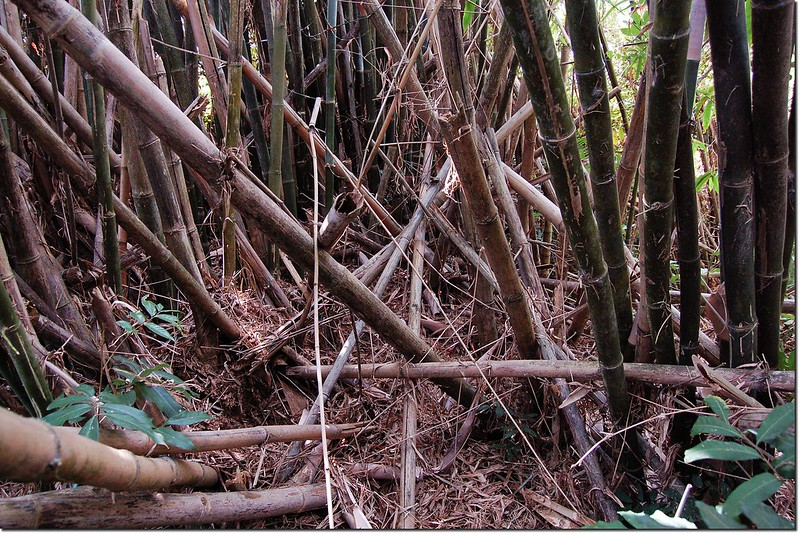 竹子赤山山頂(未清理前) 2
