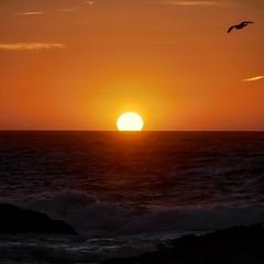 Sunset at the Bird Rock, 17 mile drive, California #sunset #birdrock #17miledrive #monterey #california #usa #vacation