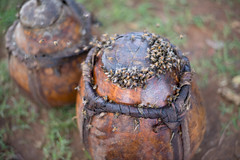 Bees swarm on pots full of honey at Alduba market.