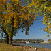 Williamstown Fall Colors by thoeflich
