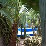 Cactus y agua